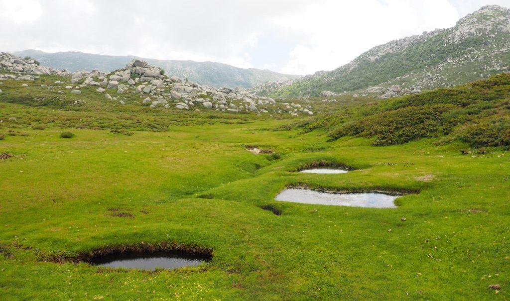 plateau du Coscionu Corse